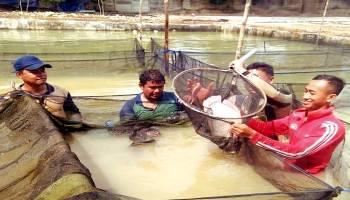 Bangka Selatan Hasilkan 30.150 Ton Ikan Dalam 9 Bulan