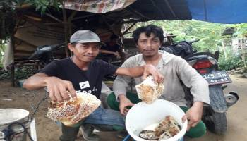 Komunitas Penyenggang Panen Setengah Ton Madu Pahit