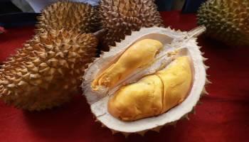 Mau Tahu Durian Siapa Saja Yang Dapat Juara Pada Kontes Durian Provinsi Babel 2020, Berikut ini Para Juaranya