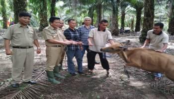 Samsumin Kembangkan 3 Potensi Desa Sarang Mandi
