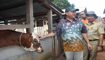 Target Swasembada Daging Sapi, Gubernur Tinjau Peternakan Sapi di Desa Bakit