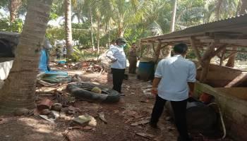 Warga Keluhkan Bau Tak Sedap Dari Peternakan Babi